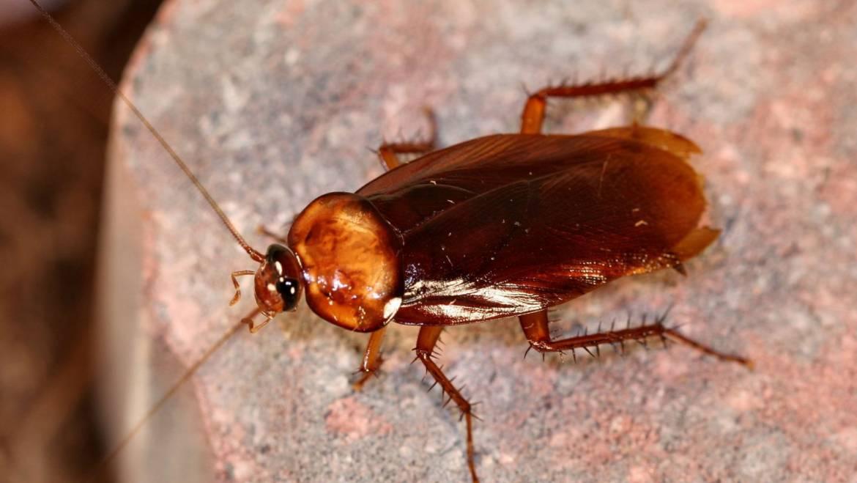 Пръскане против хлебарки